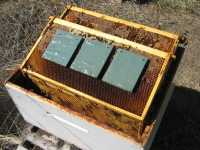 Mitegone size of hive when treating bees for mites